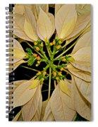 White Poinsettia Spiral Notebook