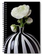 White Ranunculus In Black And White Vase Spiral Notebook