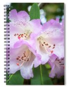 White Rhododendron Flowers With A Purple Fringe Spiral Notebook