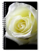 White Rose-11 Spiral Notebook