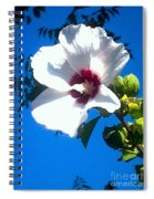 White Rose Of Sharon Hanging Out In The Sky Spiral Notebook