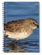 White-rumped Sandpiper Spiral Notebook