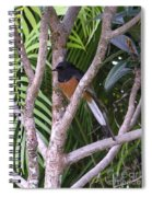 White Rumped Shama Spiral Notebook