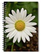 White Shasta Daisy In The Rain Spiral Notebook