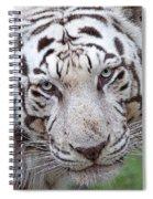 White Siberian Tiger Spiral Notebook