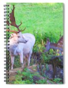 White Stag And Hind 2 Spiral Notebook