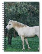 White Stallion In The Woods  Spiral Notebook