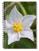 White Star Spiral Notebook