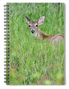 White-tailed Deer Bedded Down In Tall Grass Spiral Notebook