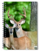 White-tailed Deer Family Spiral Notebook