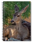 White-tailed Deer H1829 Spiral Notebook