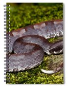White-tailed Hognose Viper Spiral Notebook