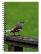 White Tailed Mocking Bird Spiral Notebook