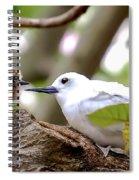 White Terns Koa And Parent...bird Love Spiral Notebook