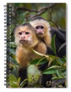 White-throated Capuchin Monkeys Cebus Spiral Notebook