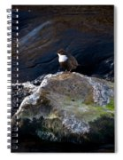White-throated Dipper Nr 1 Spiral Notebook