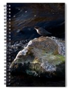 White-throated Dipper Nr 2 Spiral Notebook