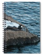 White-throated Dipper Nr 4 Spiral Notebook