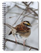 White Throated Sparrow 2 Spiral Notebook