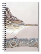 White-throated Sparrow Looking Skyward Spiral Notebook