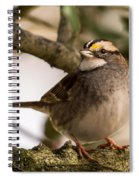 White Throated Sparrow On Branch New Jersey Spiral Notebook