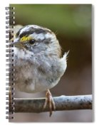 White Throated Sparrow Portrait Spiral Notebook