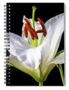 White Tiger Lily Still Life Spiral Notebook
