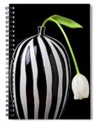White Tulip In Striped Vase Spiral Notebook