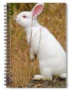 White Wabbit Spiral Notebook