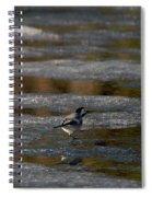 White Wagtail 4 Spiral Notebook