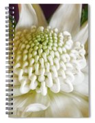 White Waratah Spiral Notebook