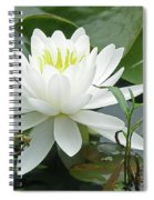 White Water Lily Wildflower - Nymphaeaceae Spiral Notebook