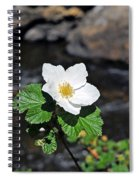 White Wild Rose In Big Thompson Canyon Spiral Notebook