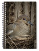 White-winged Dove - Nesting Spiral Notebook