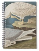 White-winged Silvery Gull Spiral Notebook