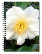 White-yellow Flower. Little Sun Spiral Notebook
