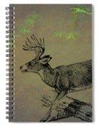 Whitetail Buck Spiral Notebook