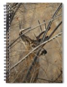 Whitetail Buck Square Spiral Notebook