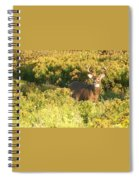Whitetail Buck Spiral Notebook