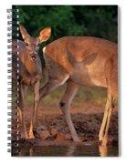 Whitetail Deer At Waterhole Texas Spiral Notebook