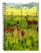 Whitetail Deer Family Spiral Notebook