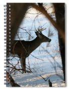 Whitetail Deer Threw The Trees Spiral Notebook