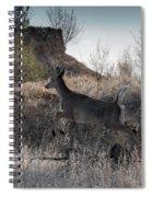 Whitetail In Flight Spiral Notebook