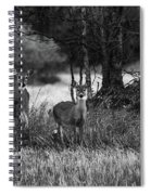 Whitetailed Deers Spiral Notebook