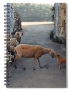 Who Is The Boss Spiral Notebook
