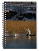 Whooper Swan Nr 12  Spiral Notebook
