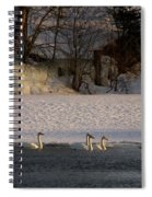 Whooper Swan Nr 14 Spiral Notebook