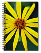 Whorled Rosinweed Spiral Notebook