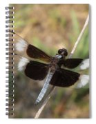 Widow Skimmer Dragonfly Male Spiral Notebook