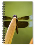 Widow Skimmer Spiral Notebook
